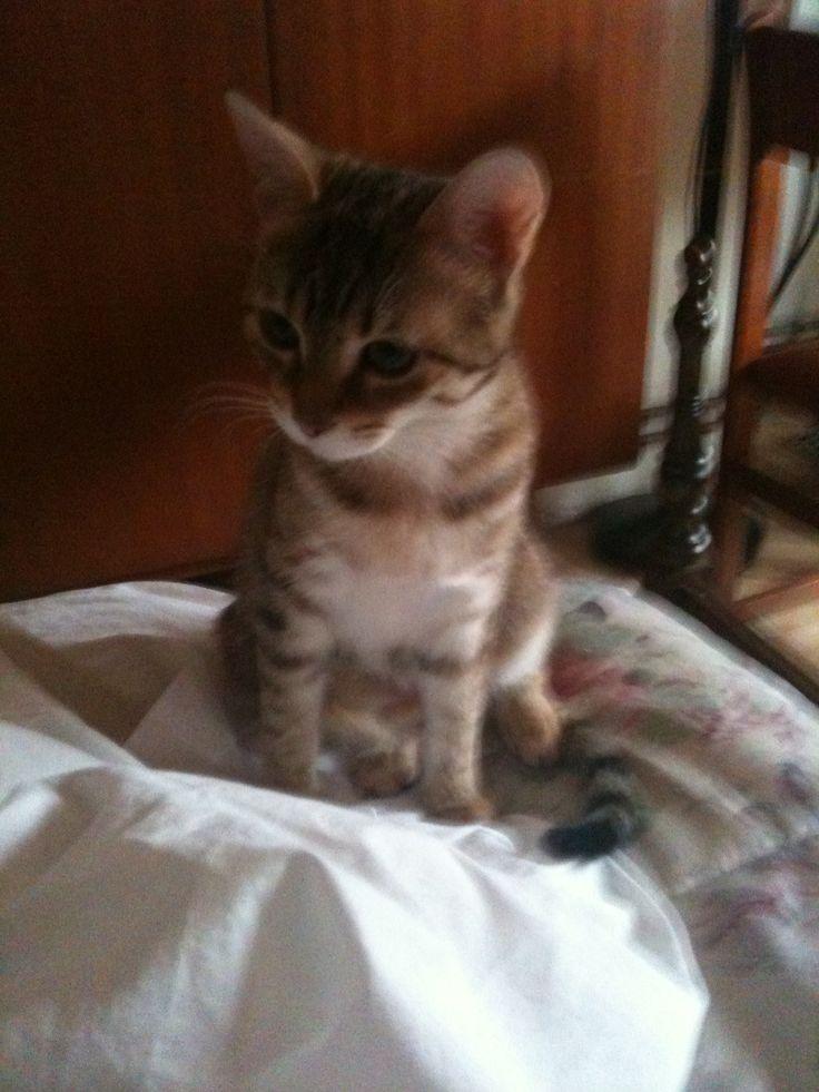 Awww my grandma's kitty is so cute!!!