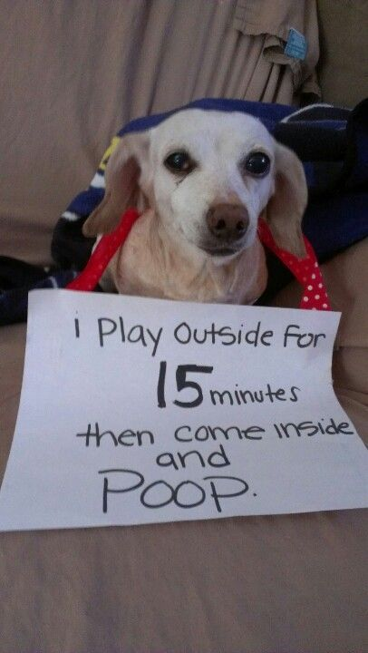 How To Train Dog To Poop And Pee Outside