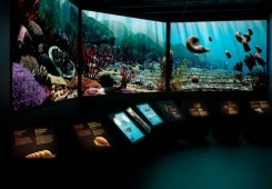 Manitoba Museum    Featuring life-sized replicas, planetarium and science centre, this award Winnipeg museum is yours to discover with a four-pack of tickets and $50 gift card to the gift shop.    manitobamuseum.ca