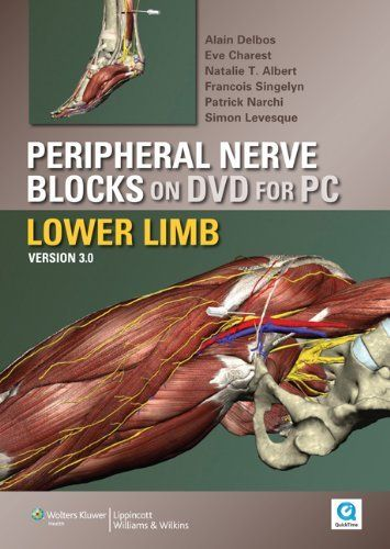 best 10+ femoral nerve ideas on pinterest   muscles of the thigh, Muscles