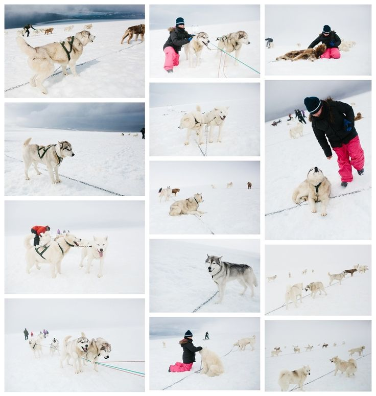 husky-sledding-iceland.jpg