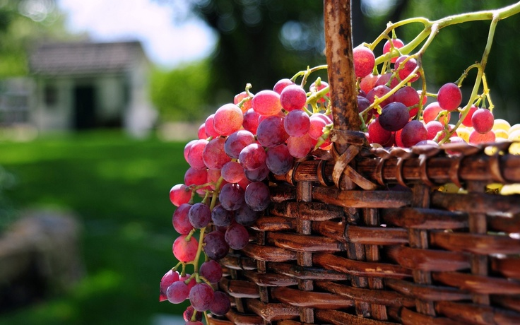 Grapes    Grapes are a portable, low-calorie snack ideal for eating anytime, anywhere.Fresh grapes add color, crunch, and a light touch of sweetness to meals. Try them in salads, side dishes, entrees and desserts.