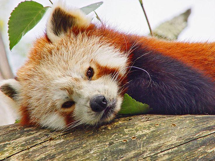 Animal Sanctuaries in Sikkim, India @ Sanctuariesindia.com