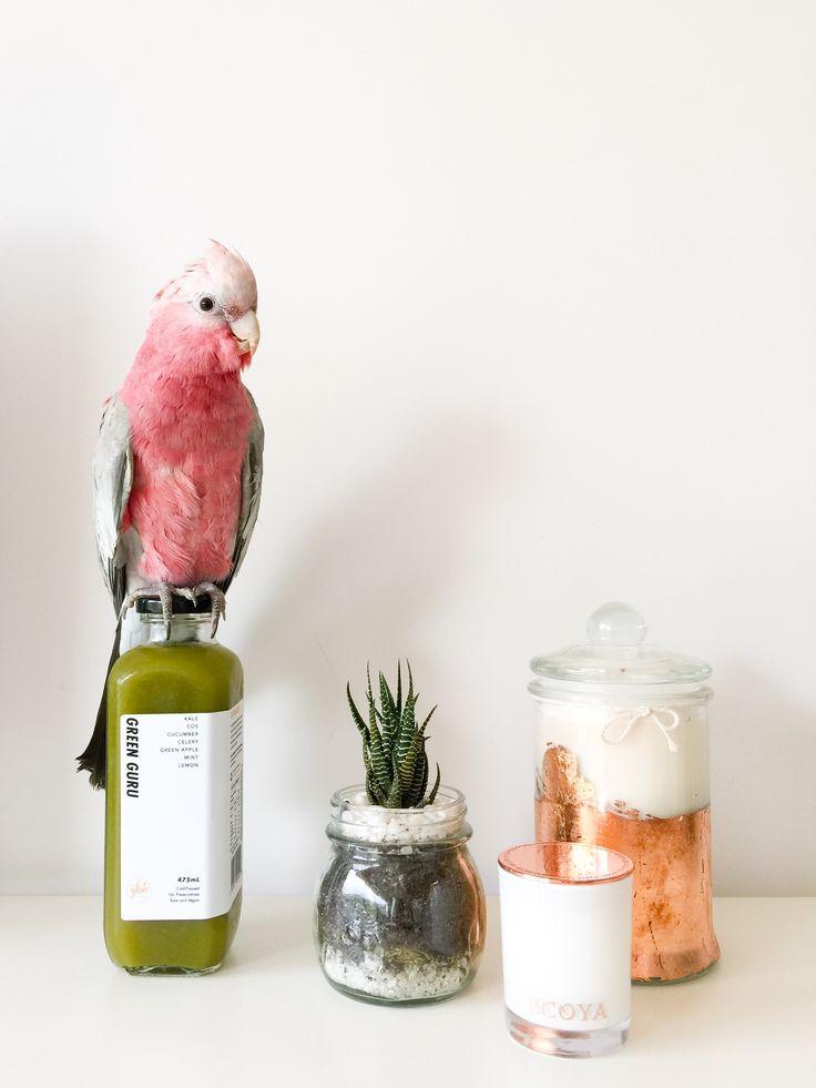 25 best Cold Pressed Juice Bottle images on Pinterest Cold pressed - new blueprint cleanse las vegas