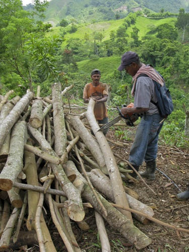 Faustino's Inga plot is now yielding huge amounts of firewood each year. Some of the logs they have just cut  are more than 20cm in diameter - not bad after just 7 years! Just by selling some of this firewood, they will be able to cover all their costs for their maize crop.