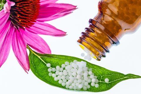 Echinacea Globuli: Infos über Anwendung und Wirkung von Echinacea in der Homöopathie, wie z.B. Echinacea als homöopathisches Mittel in den Potenzen D6, D12 ...