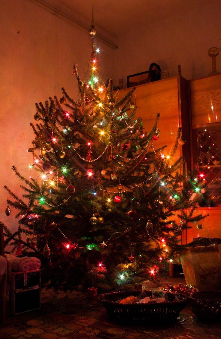 christmas tree / happy / light / beauty