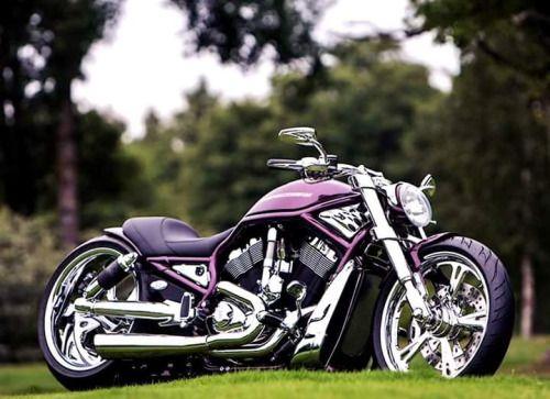 Purple VRod #harleydavidson