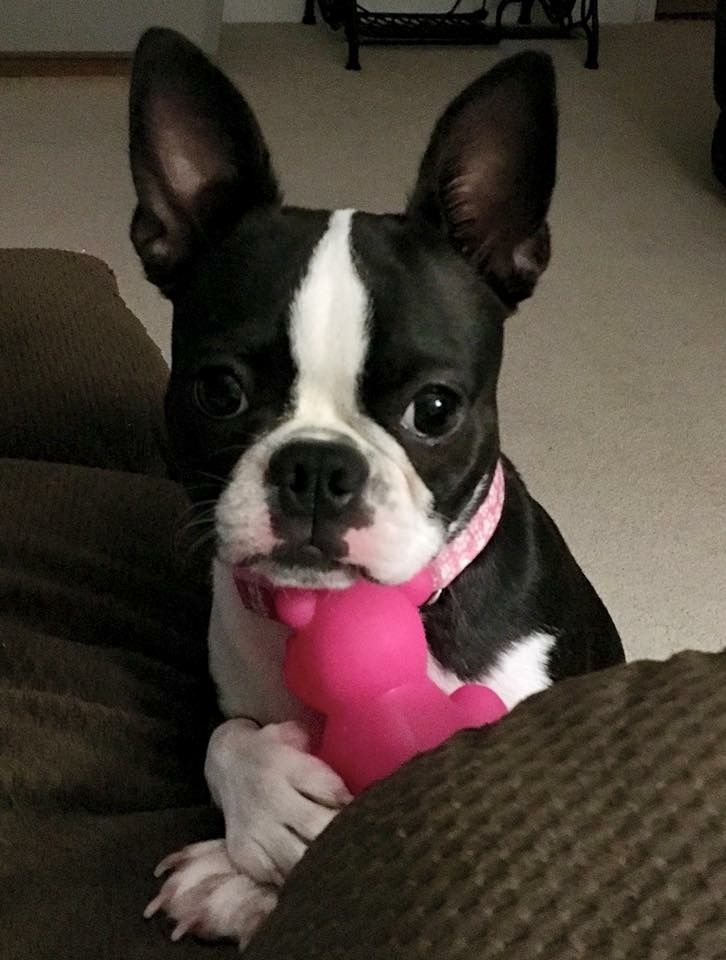 My favorite toy! No touch-ie!