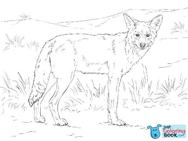 Coyote Coloring Page Free Printable Coloring Pages With Lion And Coyote Coloring Pages Download More Free Printable Hd Images For Lion Coloring Pages By Visi