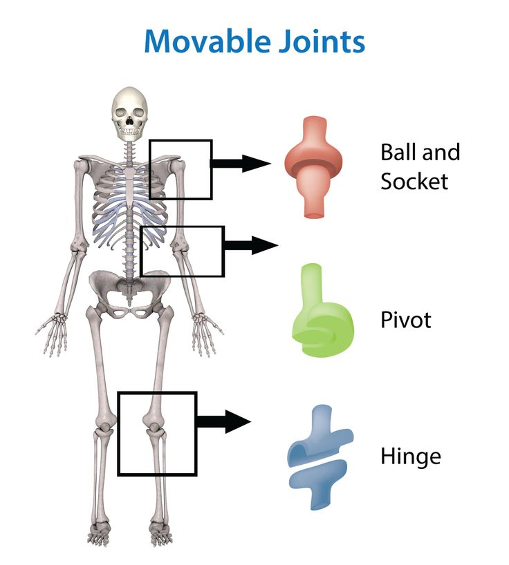 D D F A Db Fe F Bb Muscle Groups Skeleton Bones