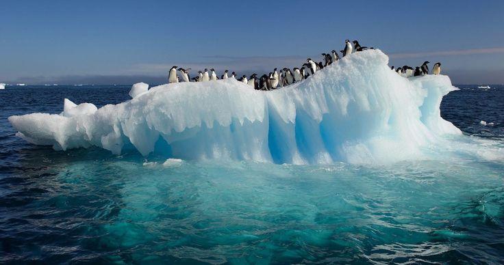 penguins on the ice wallpaper 4k ultra hd wallpaper