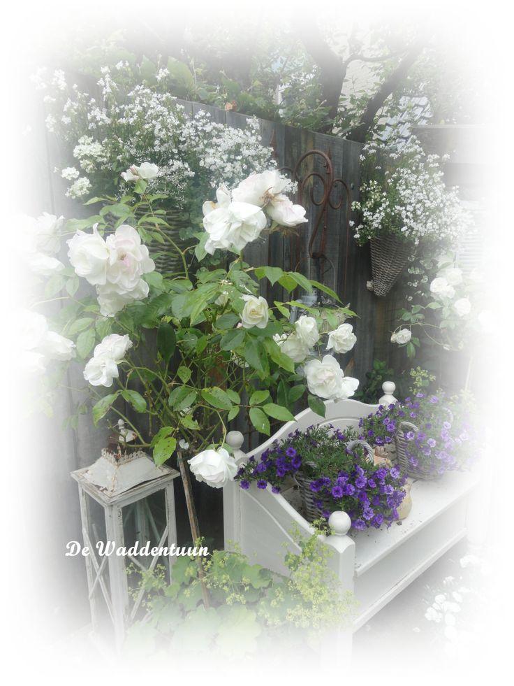http://dewaddentuun.blogspot.nl 21 juni is er een speciale opening van 14.00 tot 20.00 uur met een avondconcert [muziek in de tuin] Van 14 tot 22 juni is het de Nationale tuinenweek.    Groepen na afspraak op andere dagen welkom. Groepen minimaal 10 personen of 35,= entree 3,50 euro p.p. incl.koffie / thee en wat lekkers  U kunt ons vinden op het volgende adres: Slingerweg 87 1777 AH Hippolytushoef
