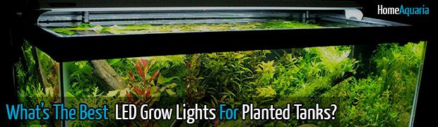 What's The Best LED Grow Lights For Your Planted Tank? #aquarium #plantedtank