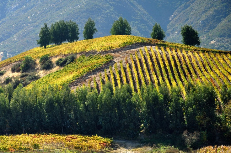 Otoño en la Ruta del Vino, Valle de Colchagua - Chile