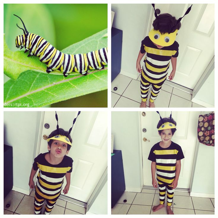 Monarch caterpillar ! Costume project !! Hand made                              …