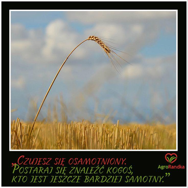 https://www.agrorandka.pl/