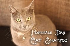 Make your own dry cat shampoo at home! Your cat will love you for not using water. www.qualivity.com