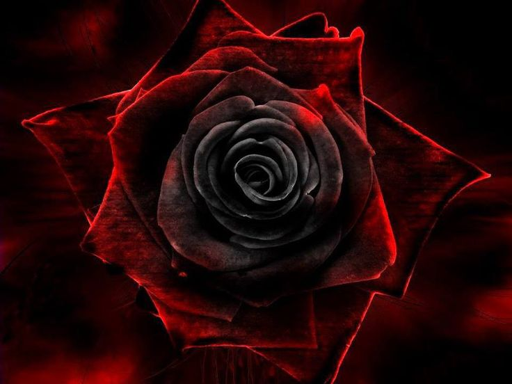 17 Best Images About Blacque Roses On Pinterest