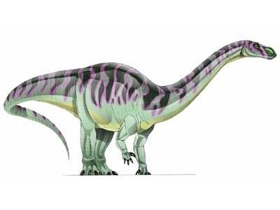 Lufengosaurus   Fossil Wiki   FANDOM powered by Wikia