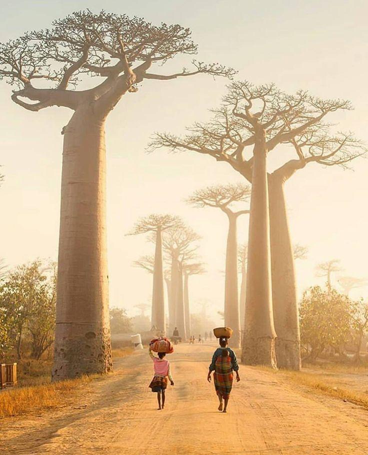 "3,860 aprecieri, 35 comentarii - Living Destinations (@living_destinations) pe Instagram: ""Avenue of the Baobabs 🌴 ~ Morondava, Madagascar Photo: @justinfoulkes Congrats! Tag your…"""