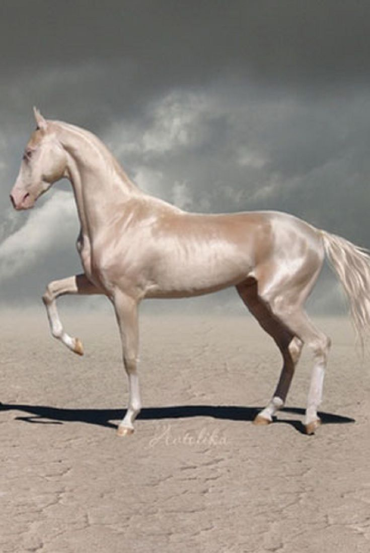 People Are Calling This Rare Creature The Most Beautiful Horse In