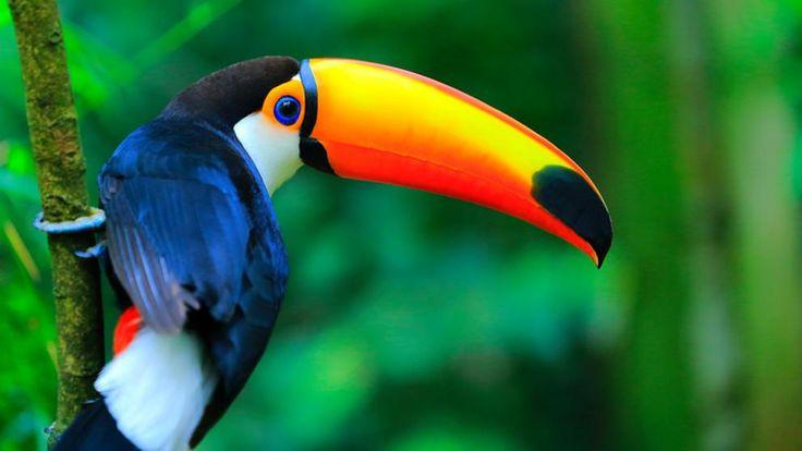 La Tierra esconde 7.000 especies de aves que los humanos desconocemos