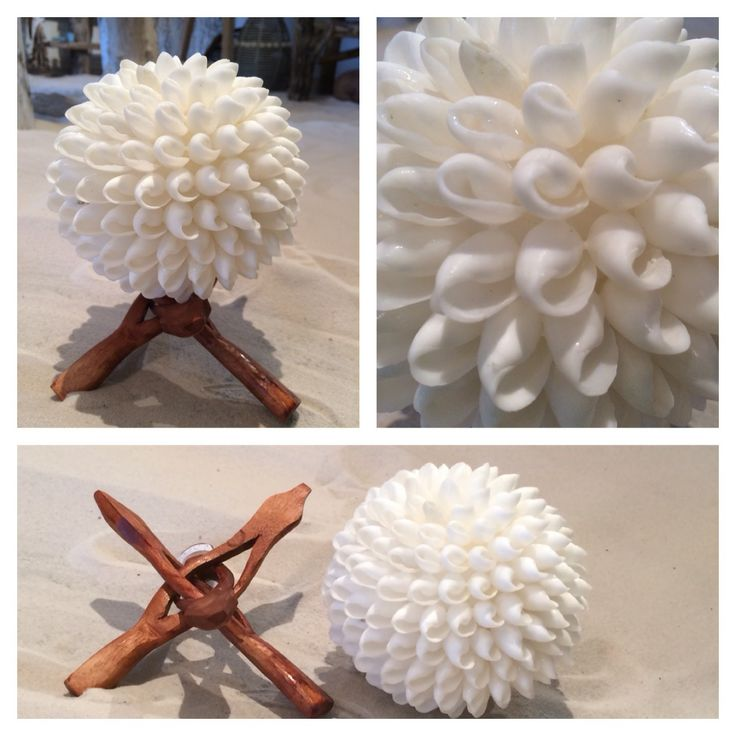 Beautiful shell ball with stand. Go and check it out online www.shellsbypauline.com or come to our shop in Noosa Shop 7, Arcadia Street, Noosa Junction