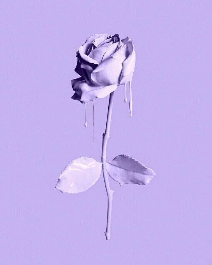 lavender melting rose iphonewallpapertumblr
