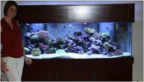 180 gallon aquarium - Google Search