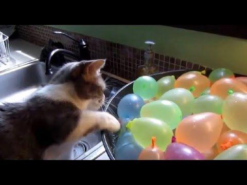 ТОП видео приколов с кошками до слез 2016