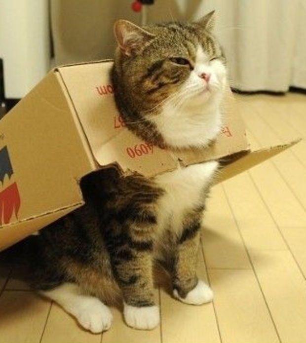 Qué Busca: ¿Llega el gato de Schrodinger? La rareza del quantum en carne y hueso https://quebusca.com/blog/article/9265671/llega-el-gato-de-schrodinger-la-rareza-del-quantum-en-carne-y-hueso