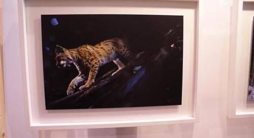 Montier-en-Der capitale de la photo animalière et de nature - #MontierenDer #wildlifephotography #photo #photographie #photographer #photography #photographe #OlivierOrtion