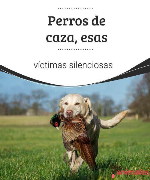Perros de caza, esas víctimas silenciosas  A pesar de la labor de los grupos defensores de los animales, los perros de caza sufren un calvario que suele terminar con una muerte prematura y violenta. #perros #caza #victimas #curiosidades