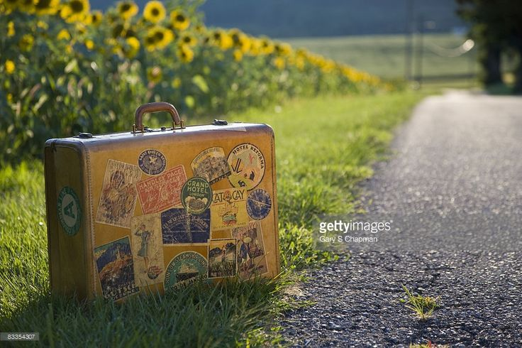 Antique suitcase with travel stickers along country road with sun flower farm