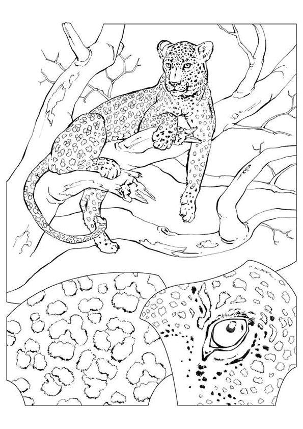 Coloriage d une panth re se reposant sur un arbre - Coloriage de zoo ...