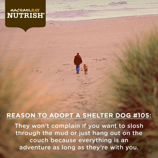 Where do you take your shelter dog?