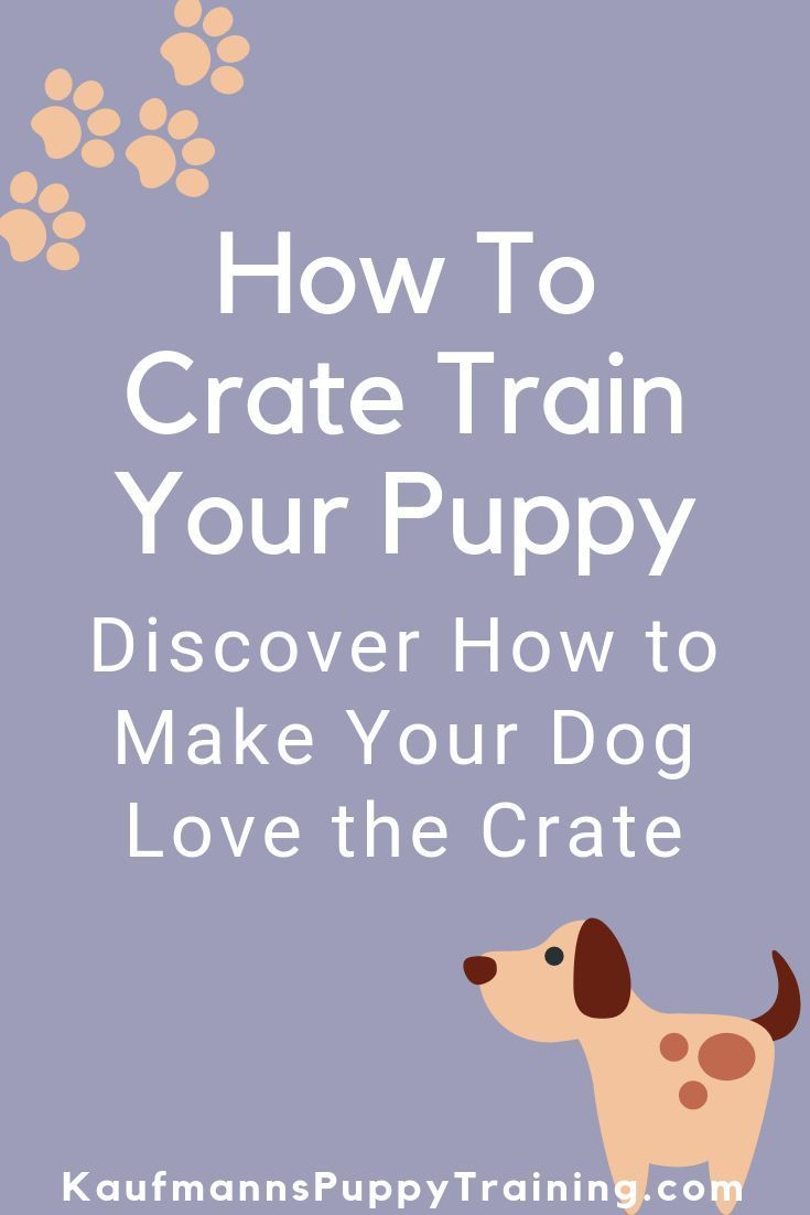 You May Already Crate Your Puppy Or You Might Be Absolutely Sure