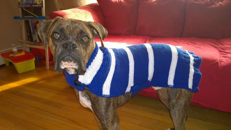 Knitting Patterns For Boxer Dogs : 17 Best images about Knitting and crochet on Pinterest Pom poms, Cowl scarf...