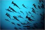 Мобильный LiveInternet Подводный мир с Норбертом Пробстом | Geo_club - Geo_club |