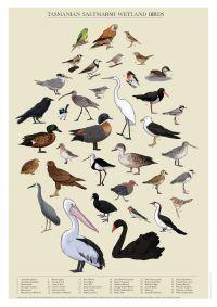 App turns birdwatchers into scientists - Office of Research Services - University of Tasmania, Australia