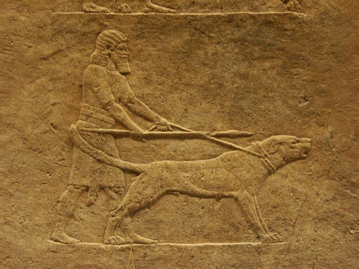 Images about dogs mesopotamia on pinterest