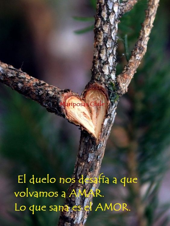 www.facebook.com/mariposasgruporenacer