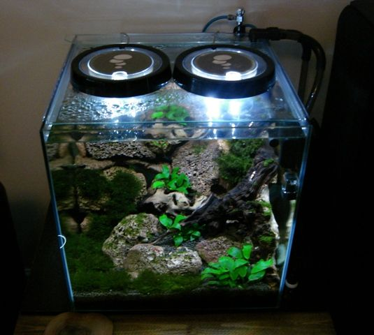 708 best images about aquascaping planted tanks for Shrimp fish tank