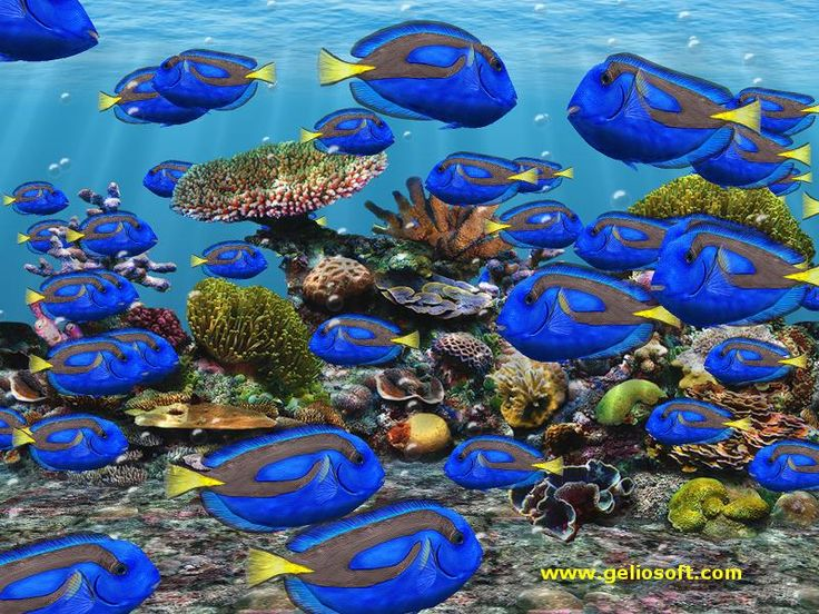Free 3d moving screensavers fish underwater world for Moving fish screensaver