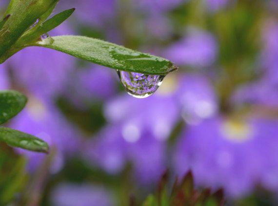 Purple & green wall art, water drop macro photography, leaf art violet lavender bathroom artwork, dew drop nature photograph botanical print