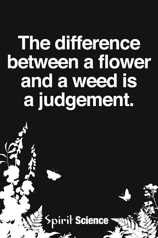 So true. Dandelions, nettles, tiger nuts, dill....all considered weeds yet very nutritious and flavorful.