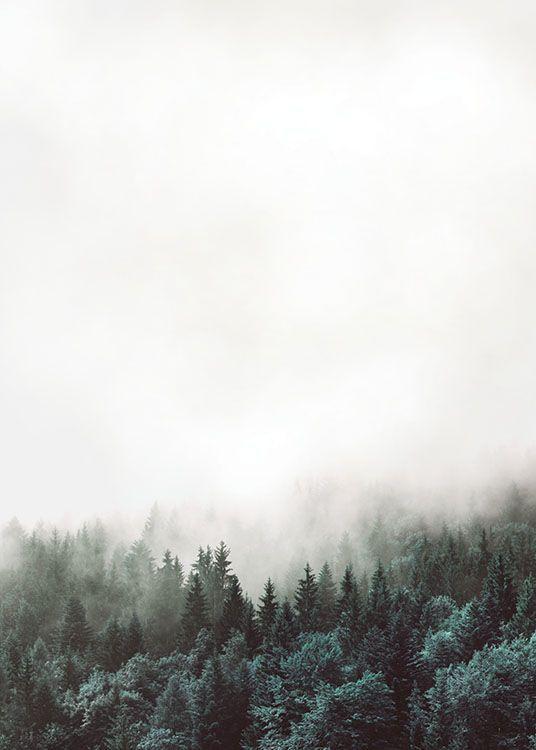Poster mit Fotokunst, Natur- und Waldfotografie | Schöne Plakate und Poster… – Regina