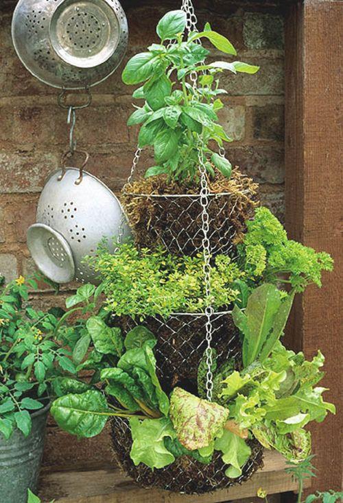 great use: Green Thumb, Garden Ideas, Container Garden, Hanging Herb, Gardens, Herbs Garden
