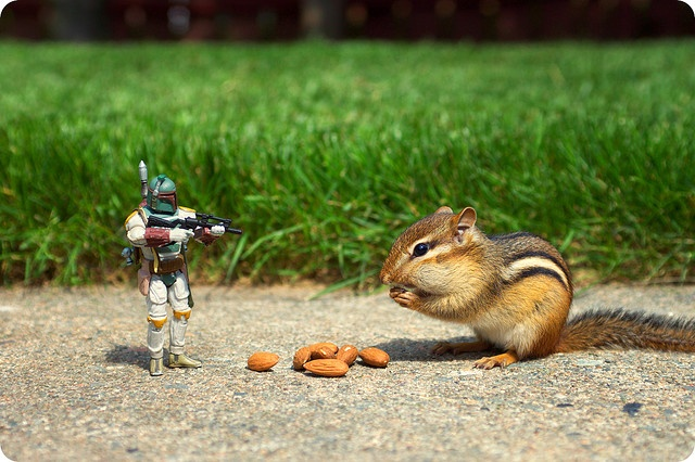 Nice Ride Animals And Things Pinterest - Adorable chipmunks go on playful adventures with lego star wars toys
